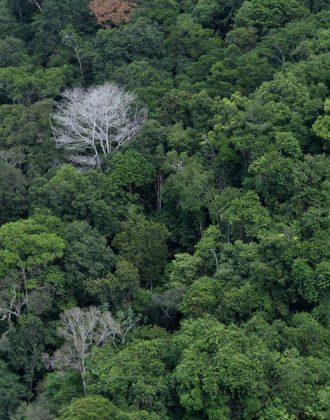 20201215_00_Amazonia-Cristiano-Martins
