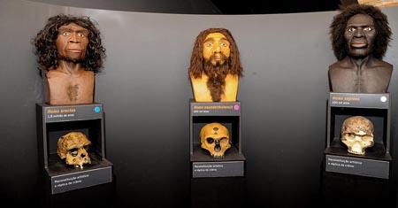 Exposição do Macaco ao Homem, Museu Catavento