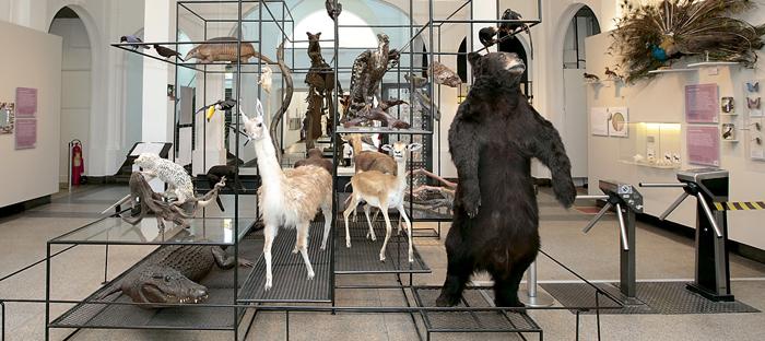 Exposição no Museu de Zoologia: objetivo é dar maior visibilidade para biodiversidade do Brasil e a necessidade de preservação Foto: Marcos Santos/Jornal da USP