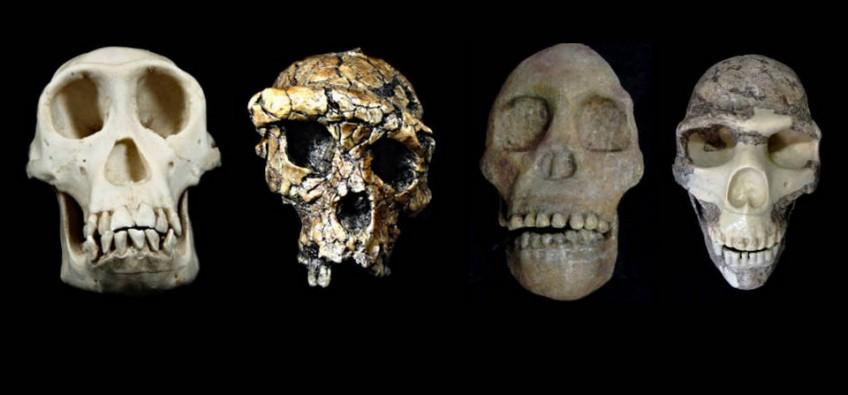 Foto: Museu Virtual da Evolução Humana/LEEH/IB