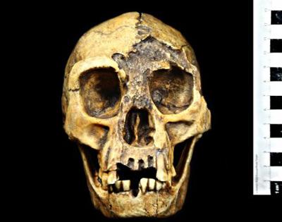 Homo florensiensis Foto: Museu Virtual da Evolução Humana/LEEH/IB