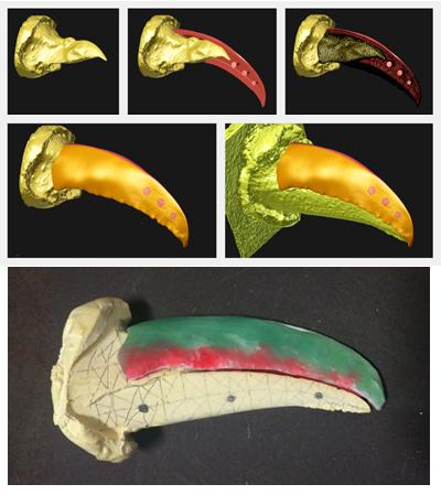 Imagens da simulação da moldagem e a prótese desenvolvida em uma impressora 3D Foto: Divulgação/FMVZ
