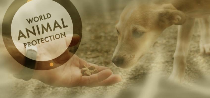 Arte sobre foto da World Animal Protection